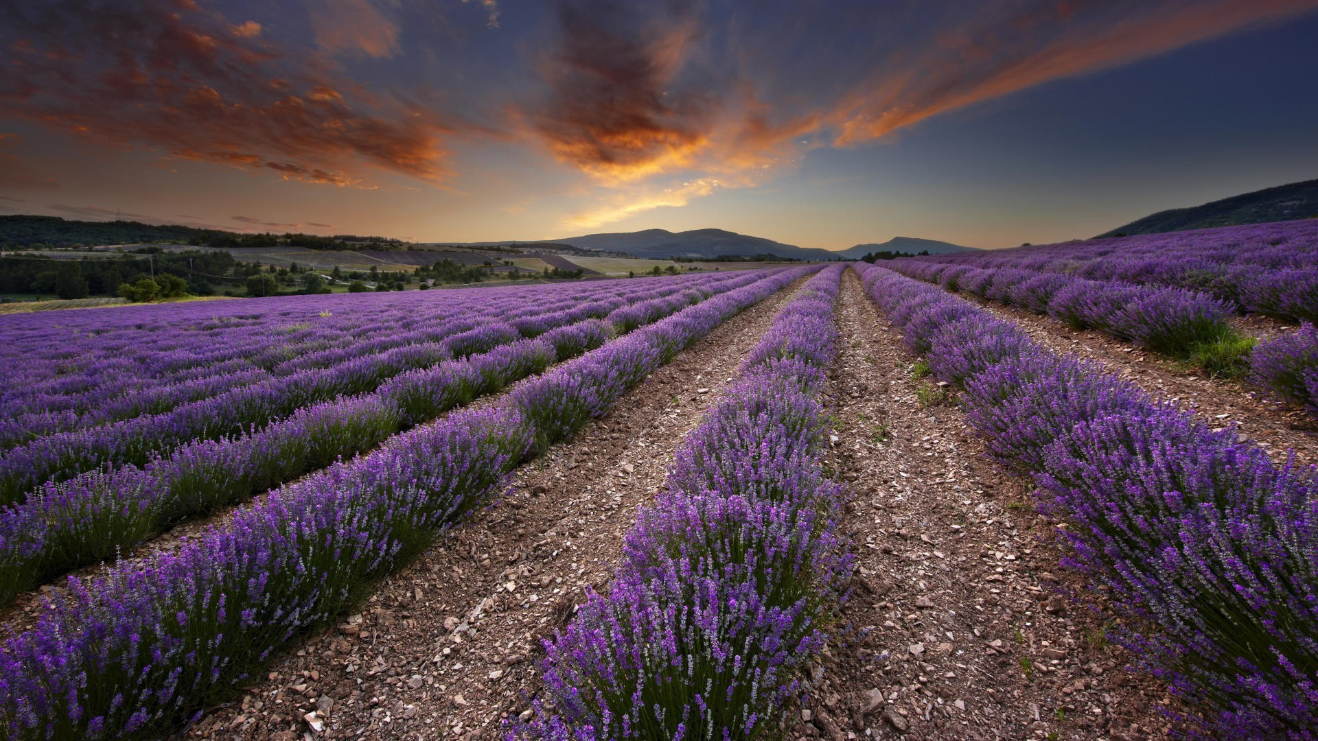 Wild Animal Wallpaper For Mobile Nature Plants Landscape Photography Lavender Field