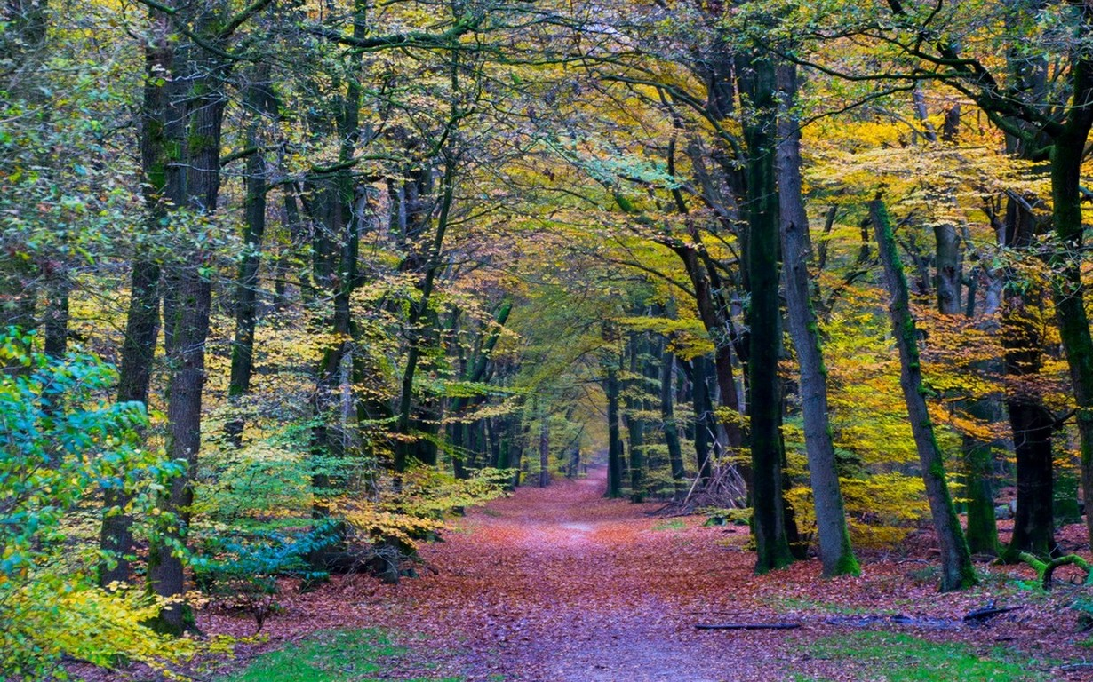 Fall Wallpaper Hd 1280x1024 Nature Landscape Forest Colorful Path Trees Fall