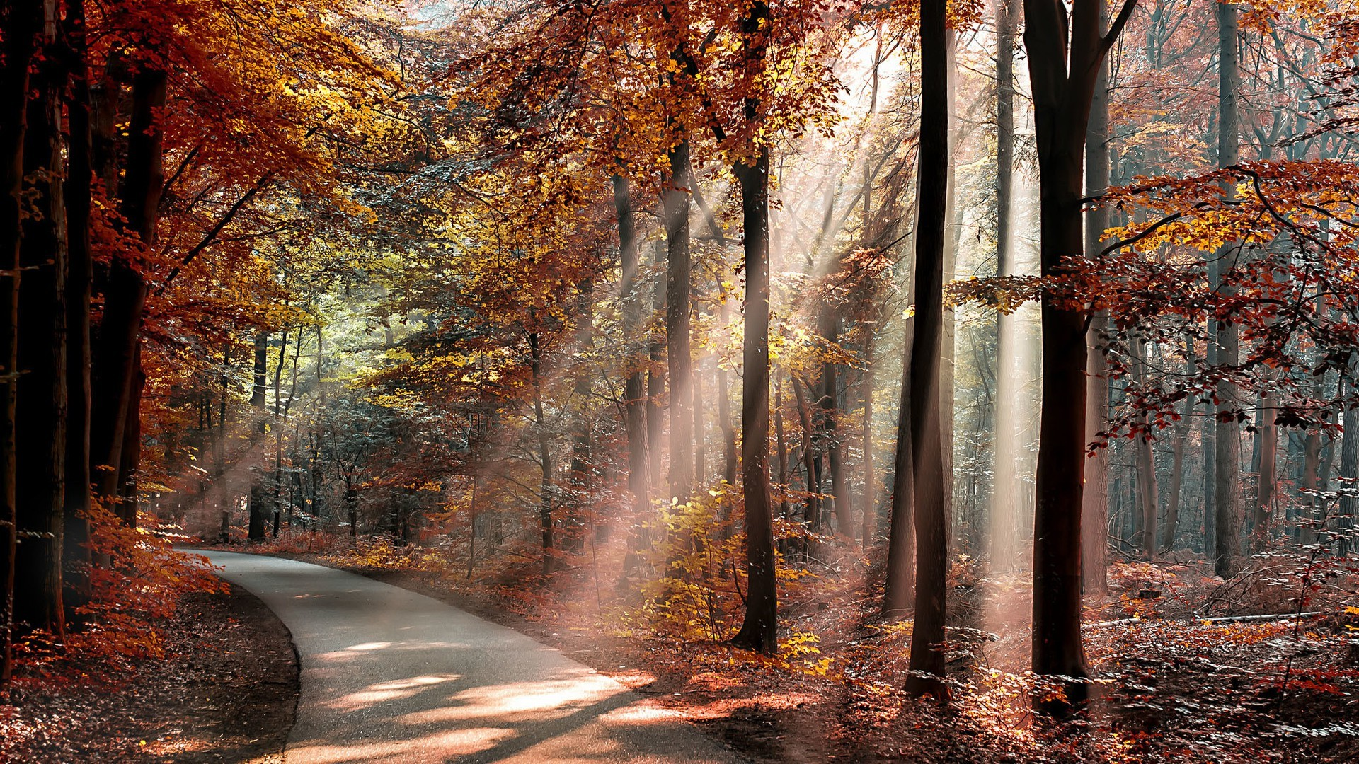 Full Screen Desktop Fall Leaves Wallpaper Nature Landscape Trees Forest Branch Sun Rays Road