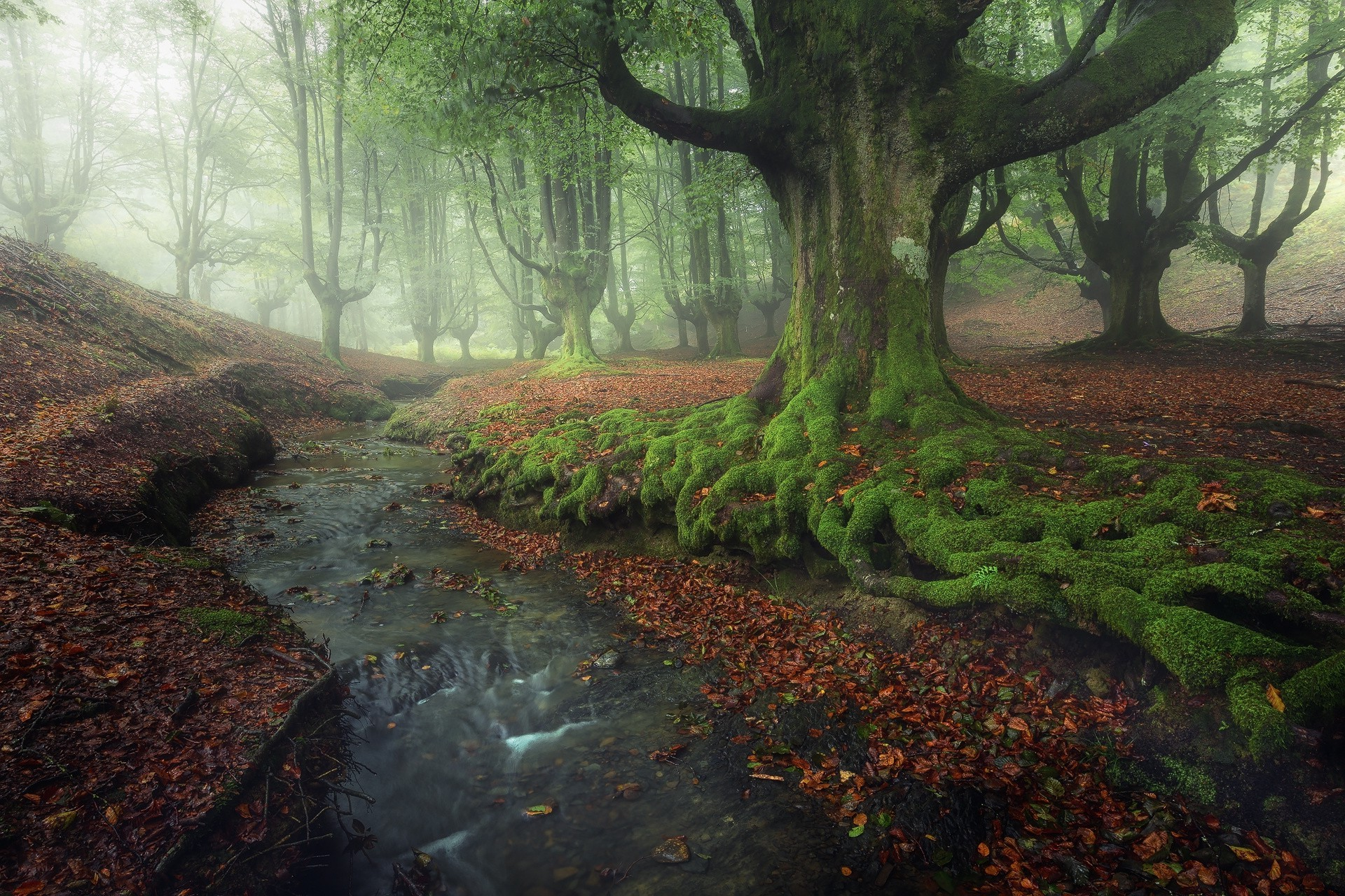 Full Screen Desktop Fall Leaves Wallpaper Nature Landscape Forest Creeks Sunrise Mist Moss