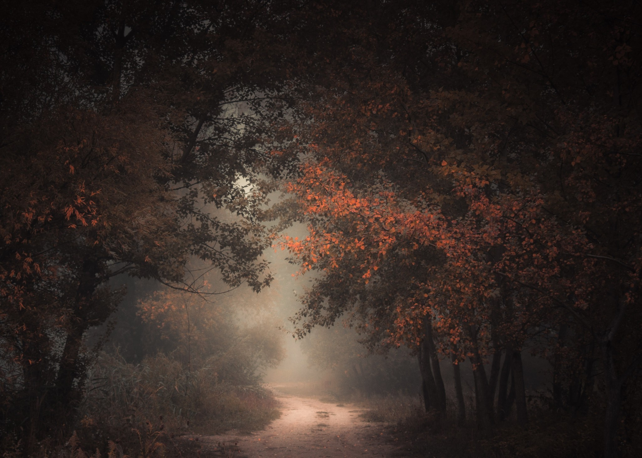 Funny Fall Wallpaper Nature Landscape Morning Forest Fall Dirt Road Mist