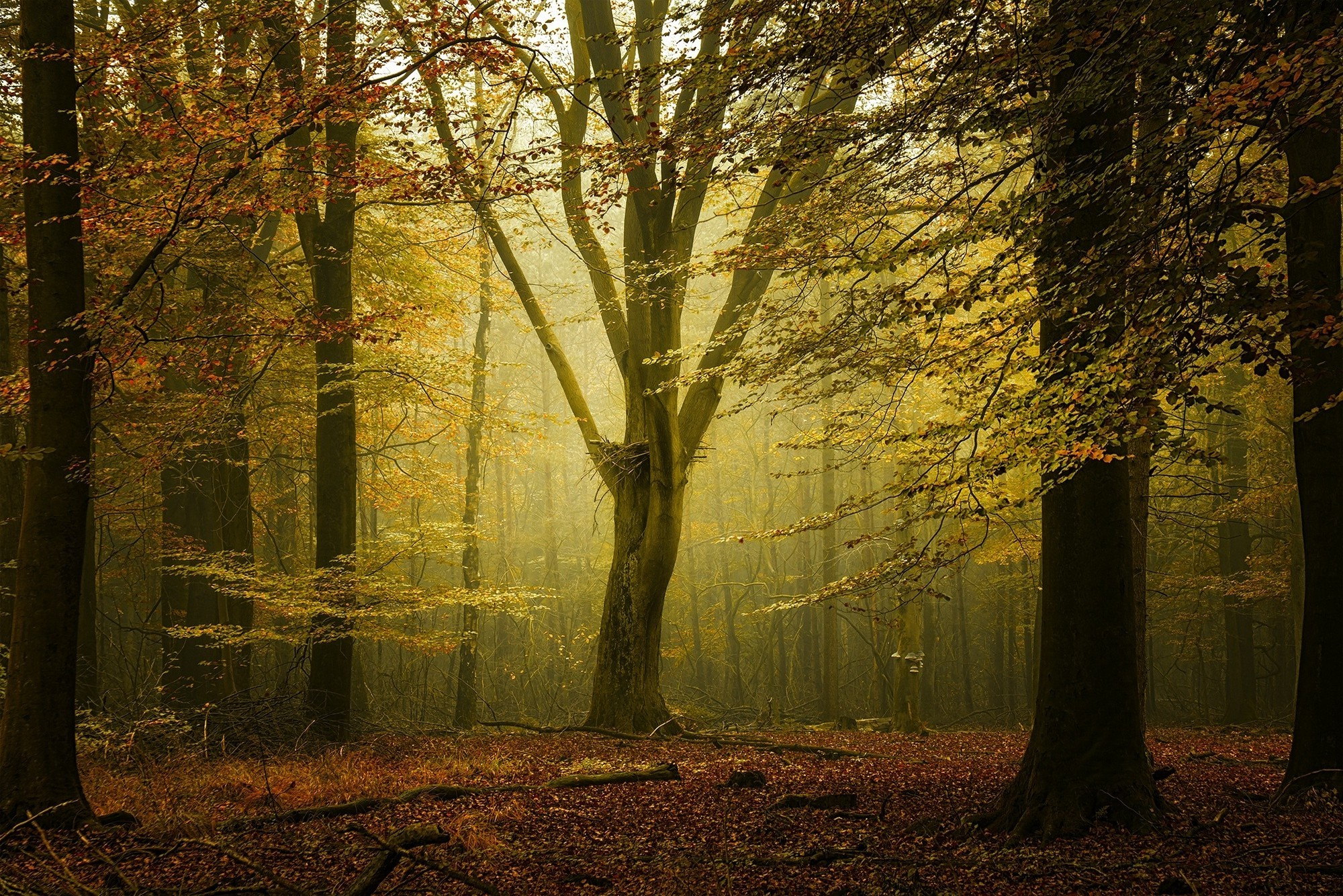 3d Fall Desktop Wallpaper Landscape Nature Fall Forest Sunlight Mist Leaves