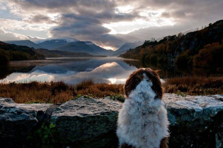 Free Fall Wallpapers 1024x768 Landscape Nature Dog Animals Lake Mountains Sunrise