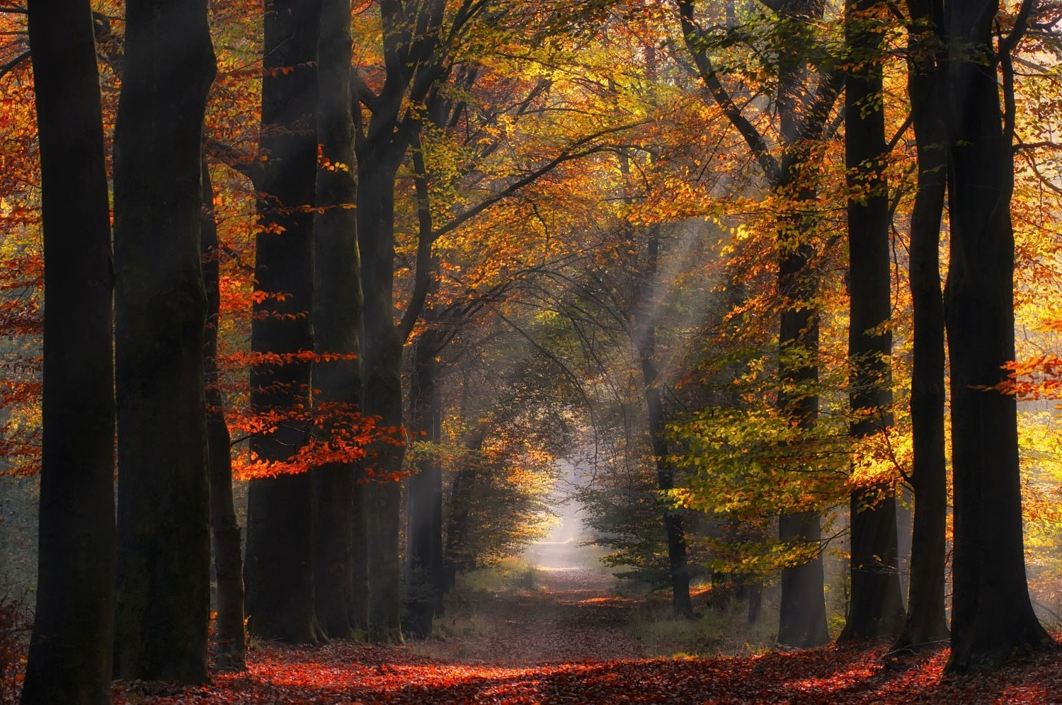 Fall Trees Desktop Wallpaper Nature Landscape Colorful Forest Path Sun Rays Mist