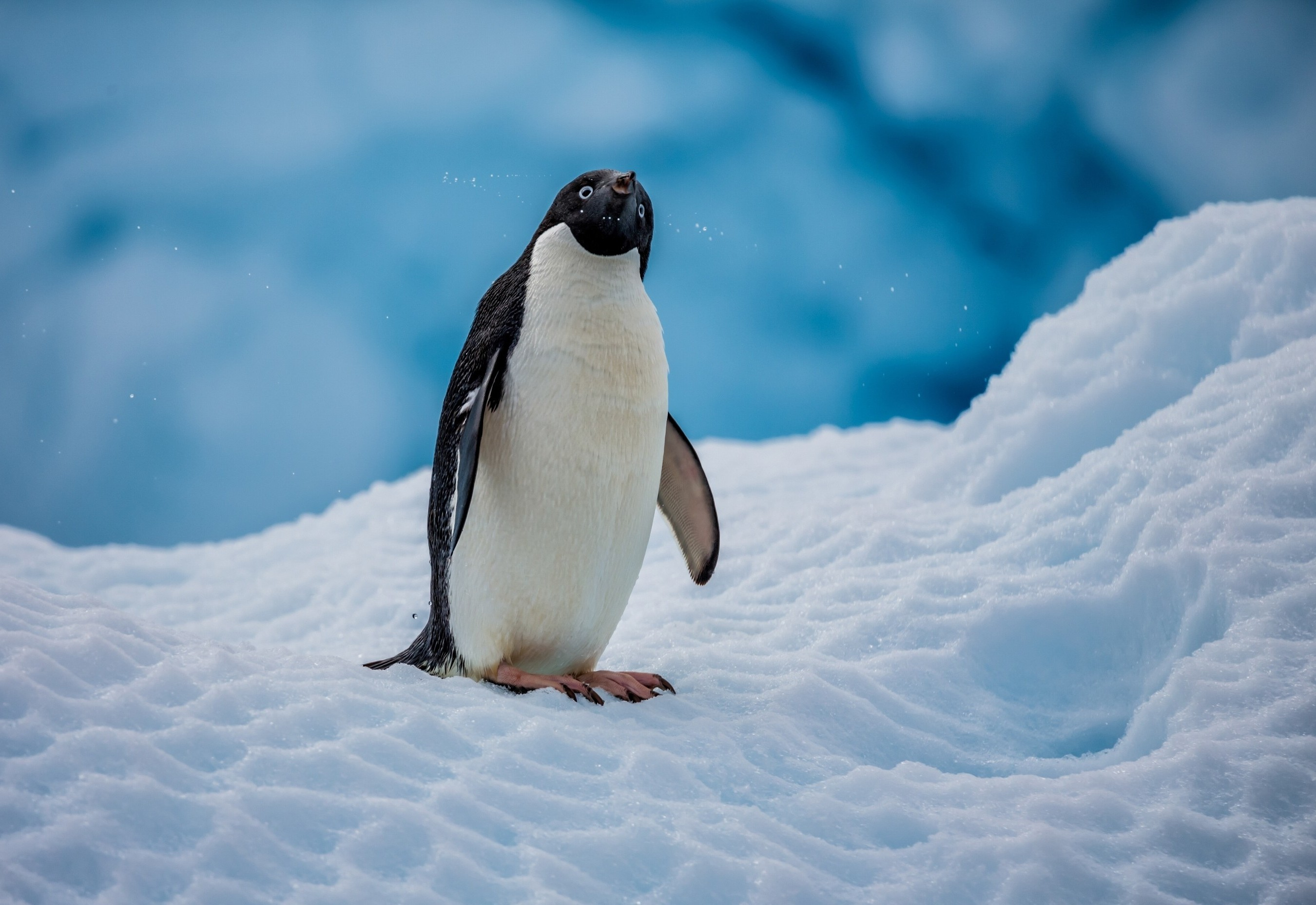 Cute Penguin Wallpaper Hd Penguins Nature Ice Snow Animals Wallpapers Hd
