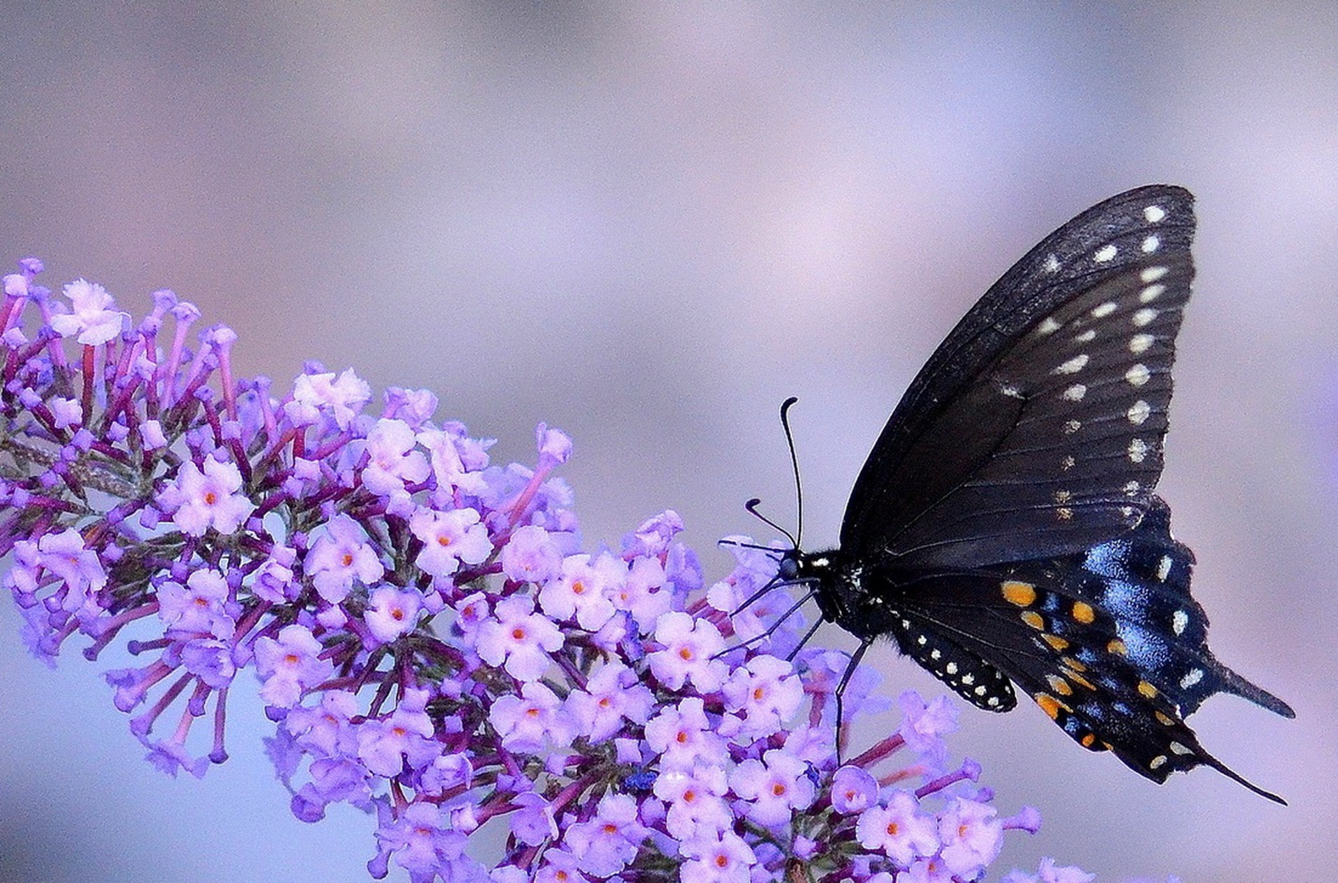 Mobile Flowers 3d Wallpapers Animals Macro Insect Butterfly Flowers Purple Flowers