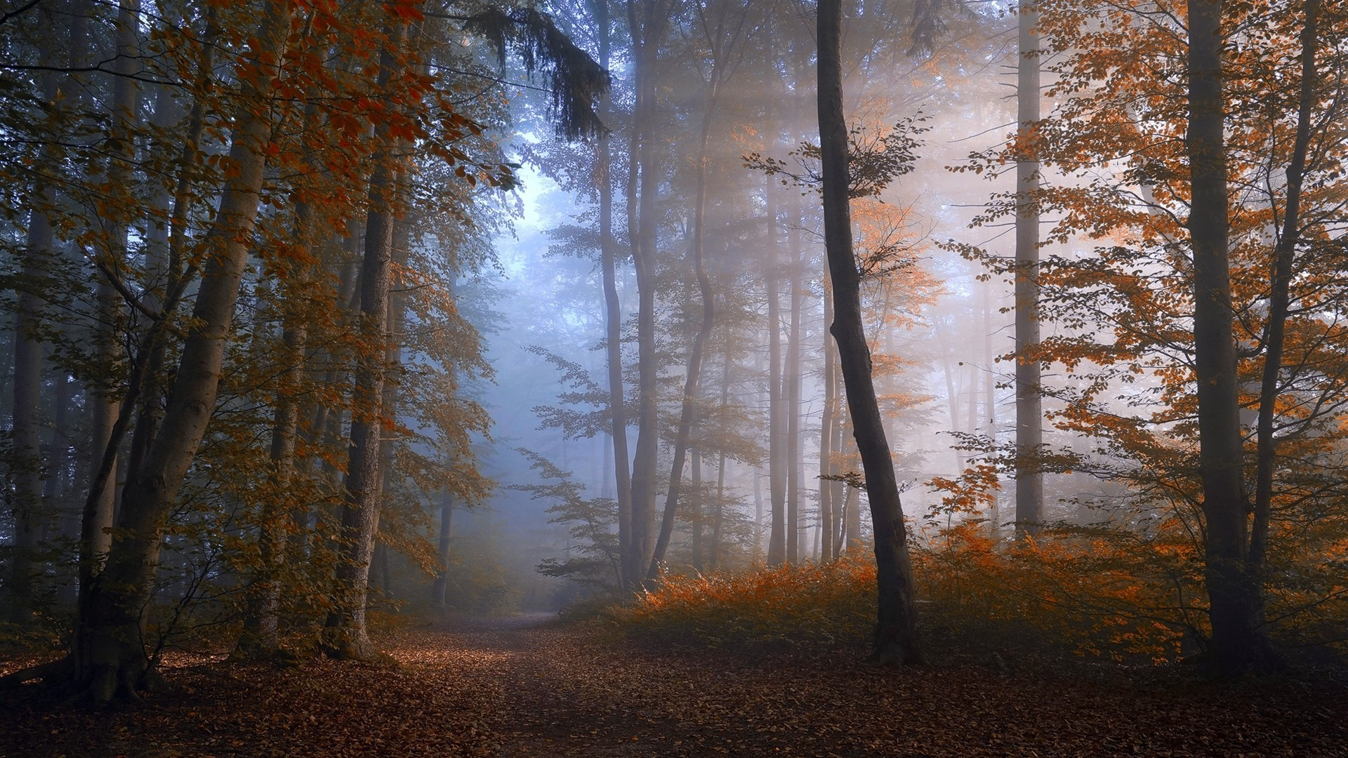 Fall Wallpaper Backgrounds Desktop Nature Landscape Forest Fall Mist Path Trees