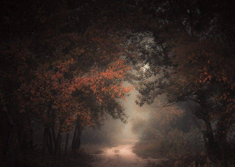 Foggy Fall Wallpaper Nature Landscape Morning Forest Fall Dirt Road Mist