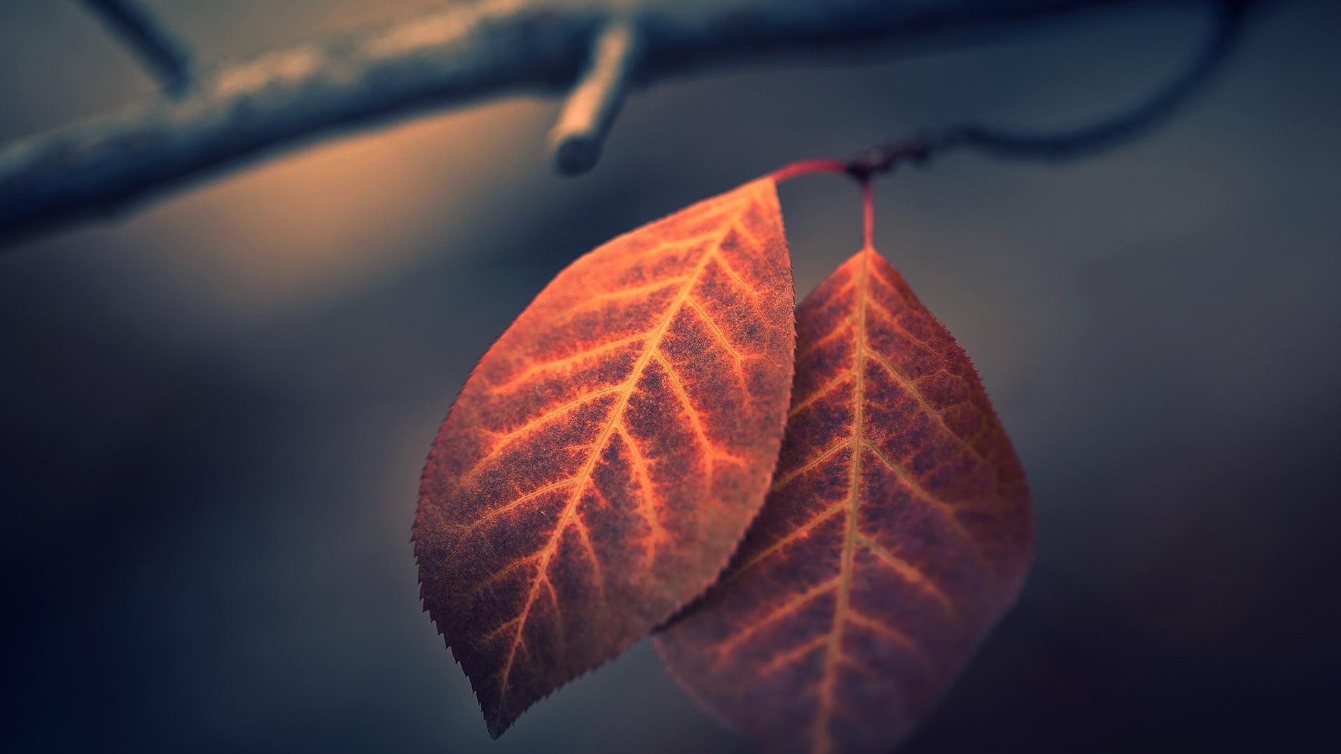 Fall Scenery Desktop Wallpapers Photography Nature Leaves Macro Branch Fall