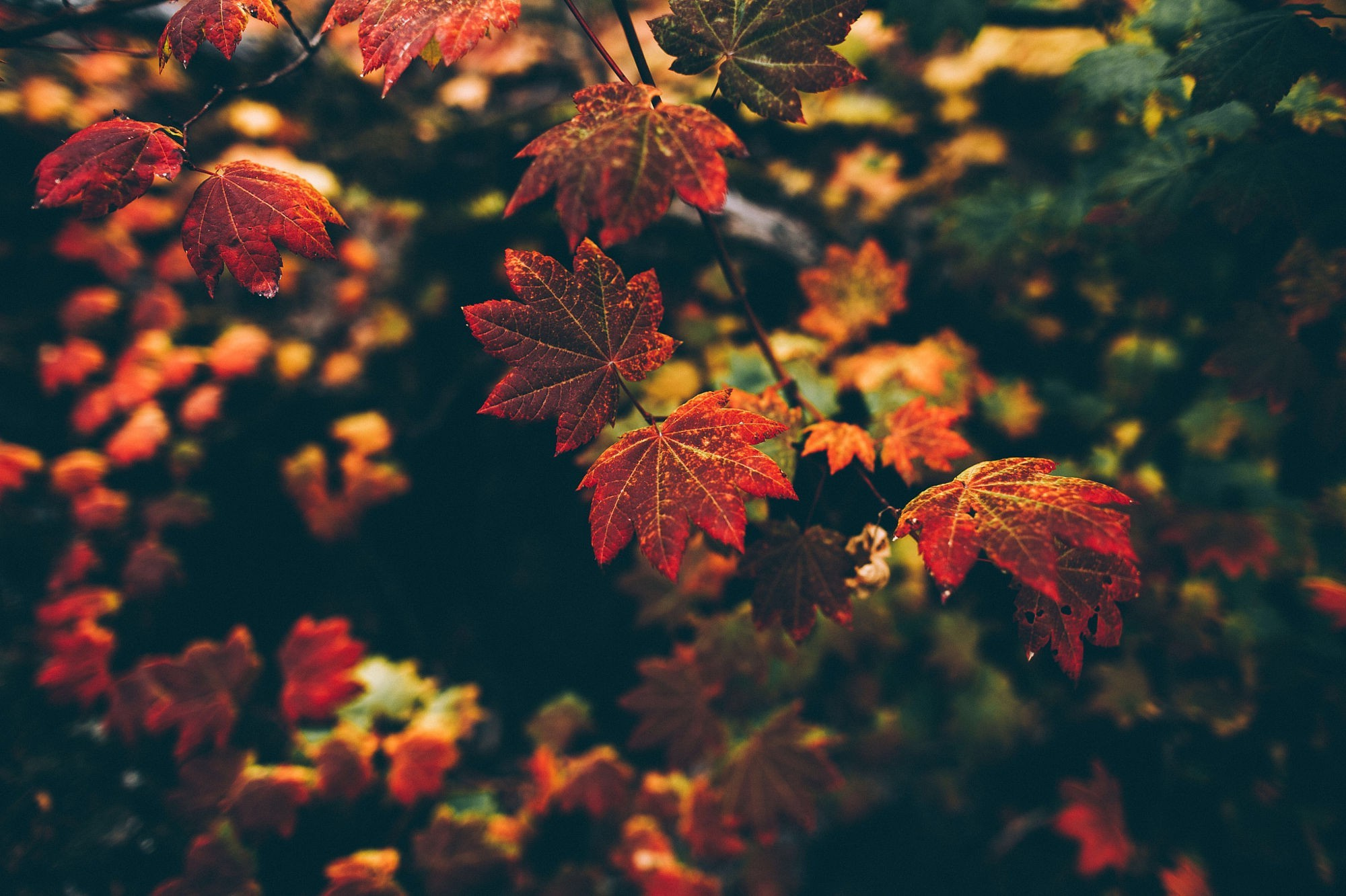 Fall Home Screen Wallpaper Leaves Nature Fall Filter Depth Of Field Wallpapers Hd