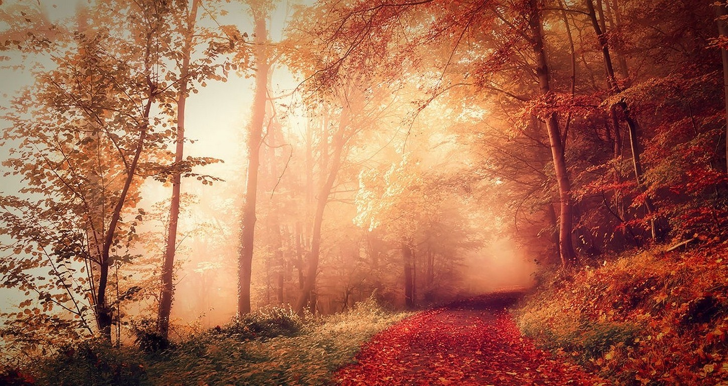 Full Screen Desktop Fall Leaves Wallpaper Nature Landscape Fall Forest Mist Path Dirt Road