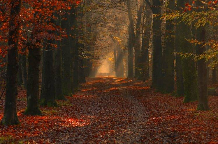 Fall Colors Mobile Wallpaper Nature Landscape Photography Forest Path Red Leaves