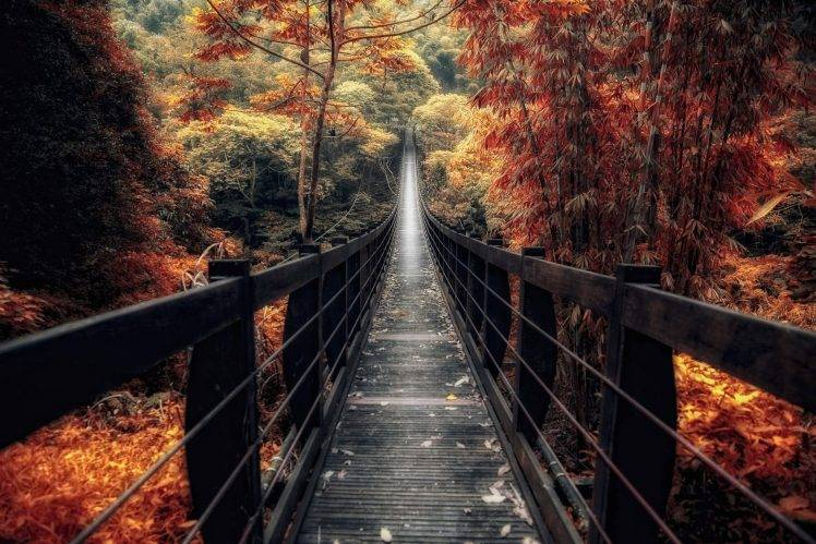 Red Fall Leaves Iphone Wallpaper Nature Landscape Bridge Wooden Surface Fall Forest