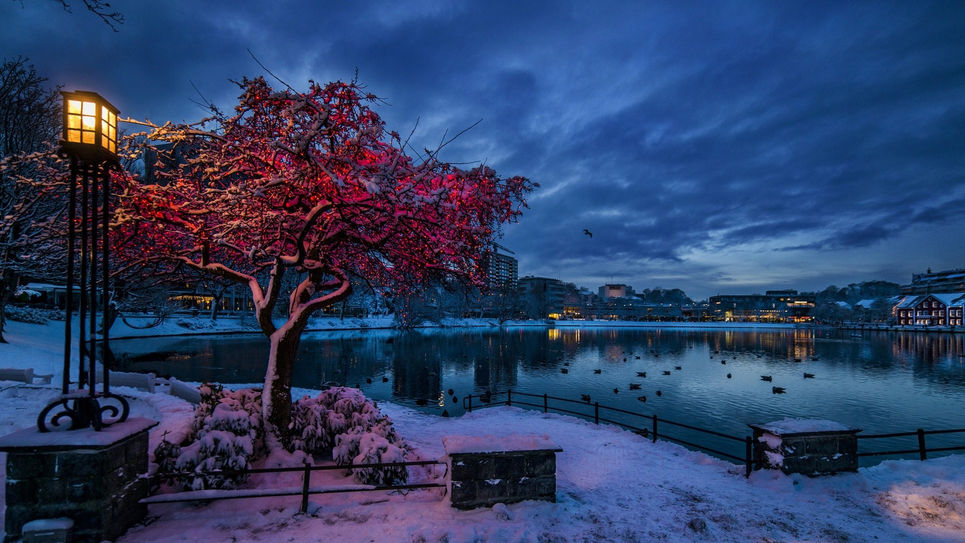 Home Screen Wallpaper Fall Nature Trees City Cityscape Norway Evening Winter
