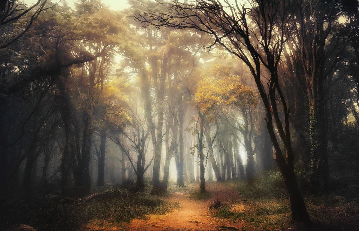 Full Hd 3d Wallpapers 1920x1080 Free Download For Mobile Nature Landscape Forest Path Mist Sunlight Shrubs