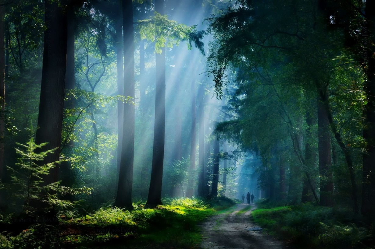 3d Love Wallpapers Download For Mobile Walking Nature Landscape Forest Dirt Road Sunbeams