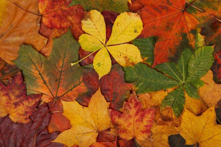 Hd Wallpaper Texture Fall Harvest Abstract Fall Bright Brown Colorful Green Leaves