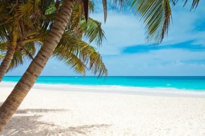 beach, Blue, Coast, Palm Trees, Landscape, Caribbean, Sea, Sky, Watering Wallpapers HD / Desktop ...