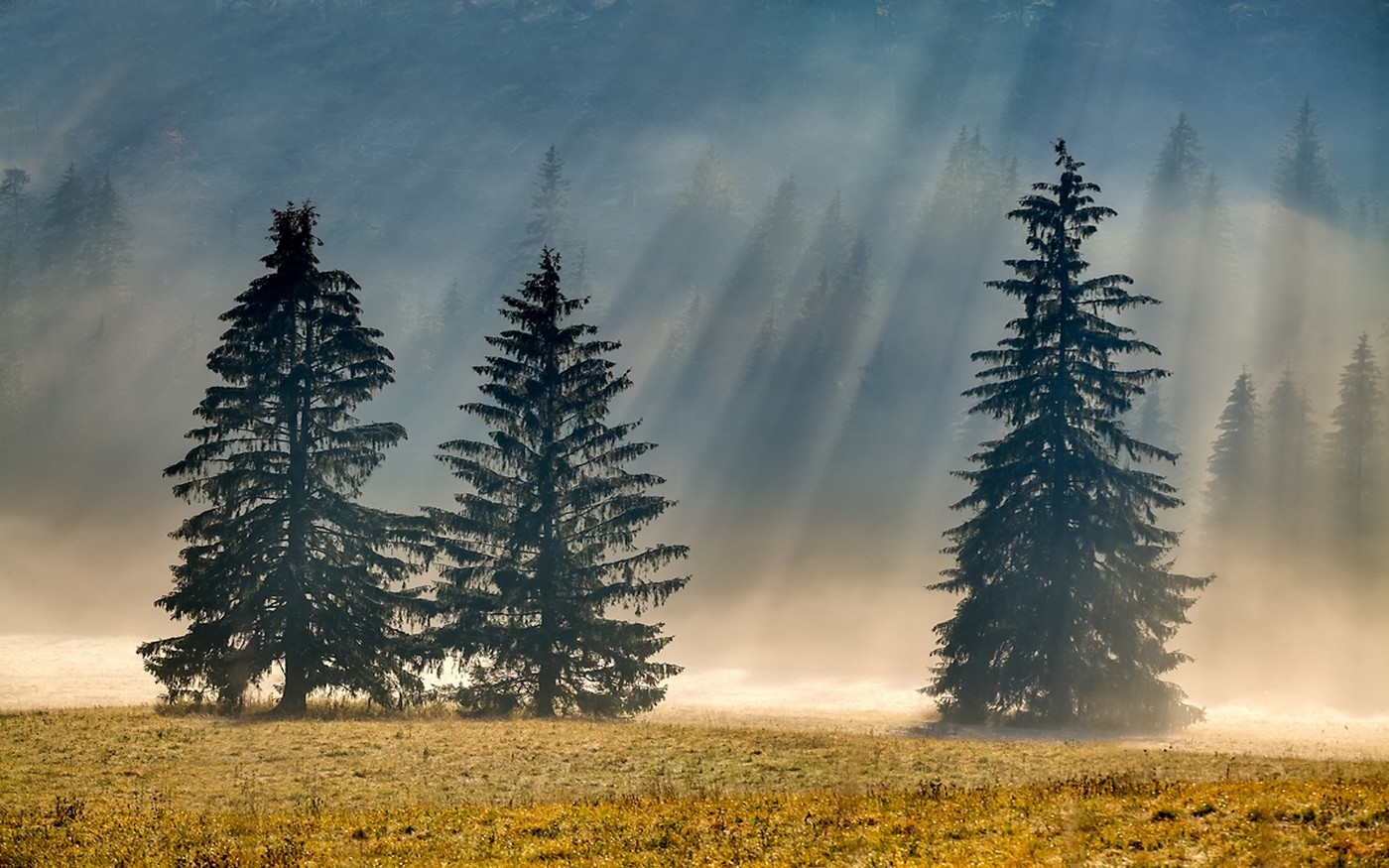 3d Car Wallpaper 1366x768 Photography Nature Landscape Pine Trees Morning
