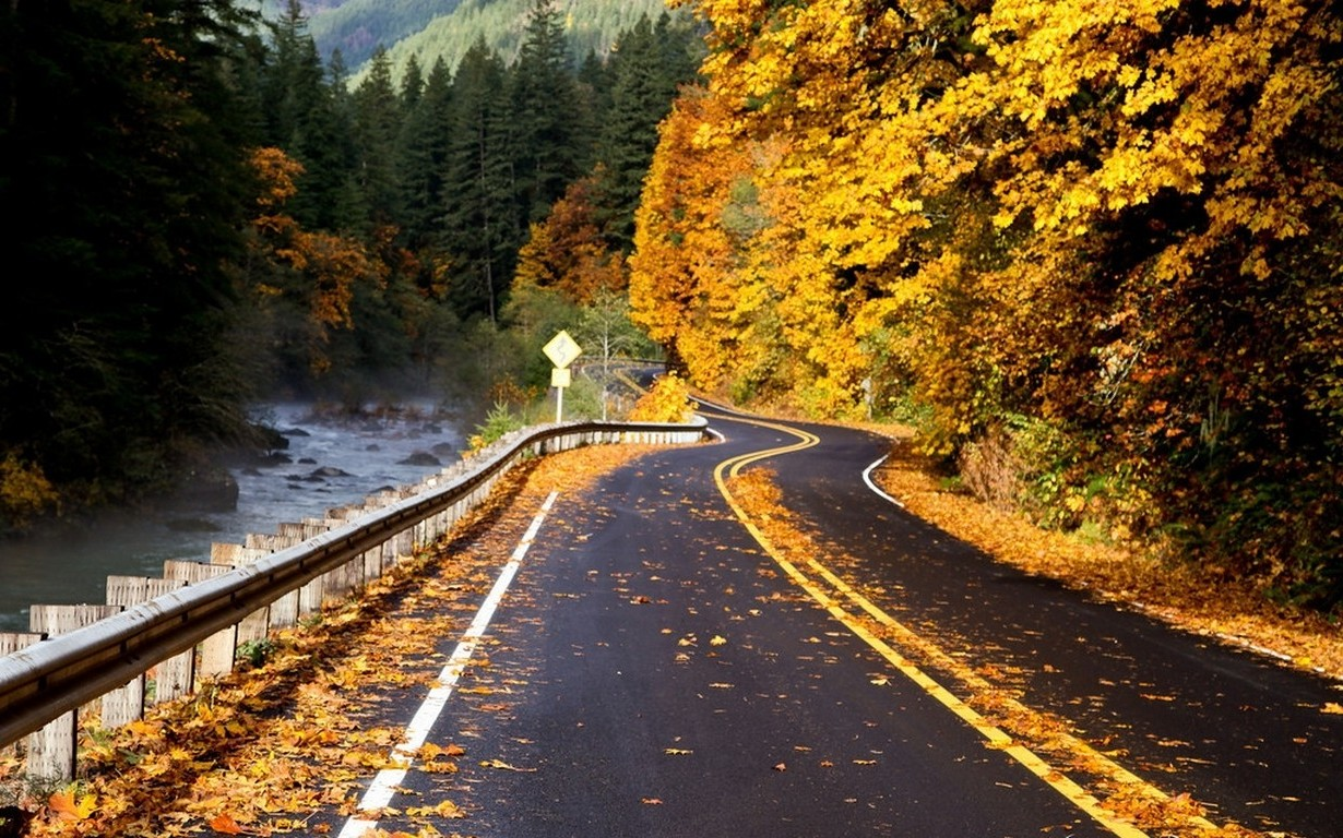 Desktop Wallpaper Fall Foliage Photography Nature Landscape Road River Forest Fall