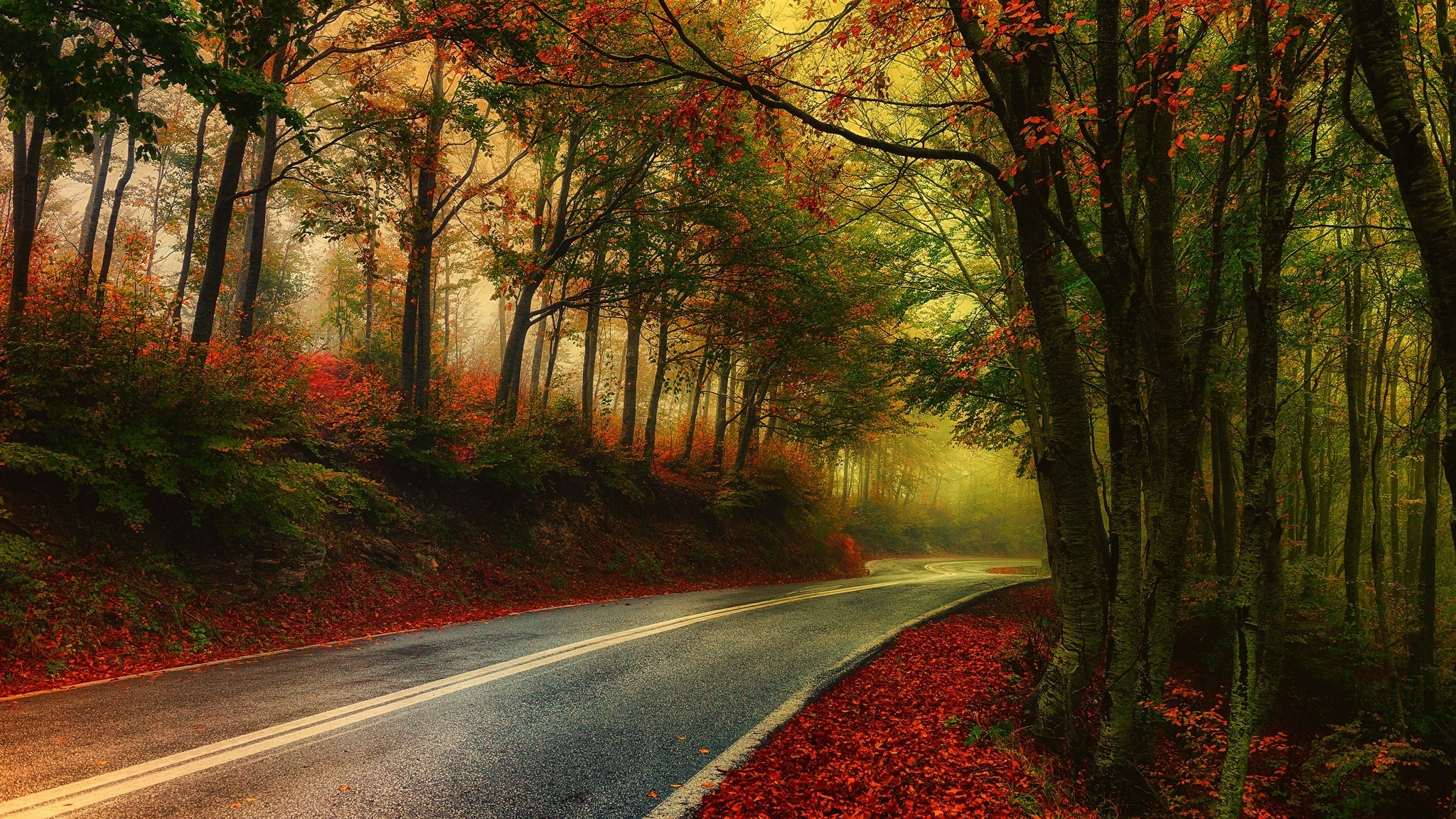 Fall Smoky Mountains Wallpaper Nature Photography Landscape Mist Road Fall Morning