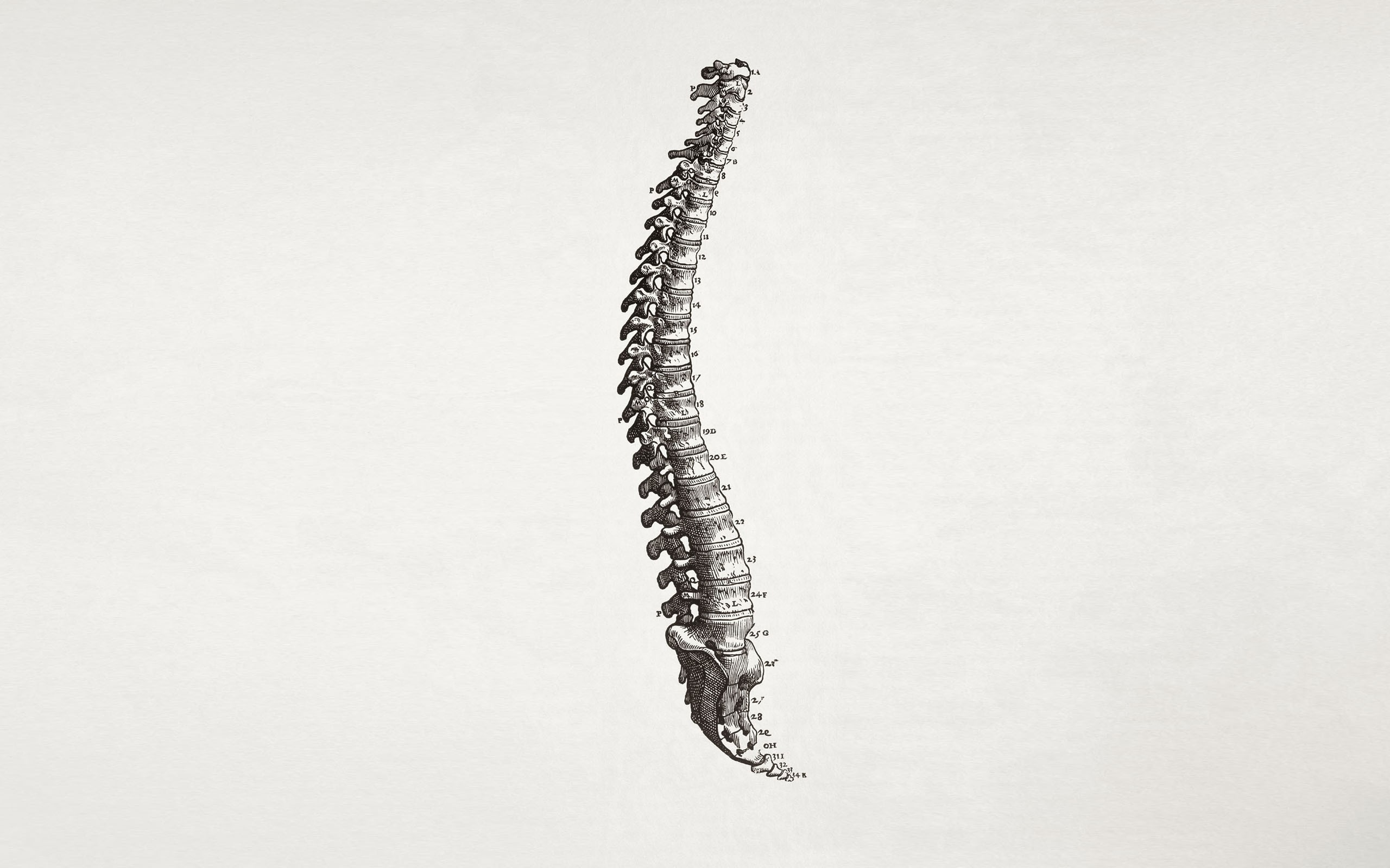 Nature Full Hd 3d Wallpapers 1920x1080 Spine Simple Background Minimalism Bones Medicine