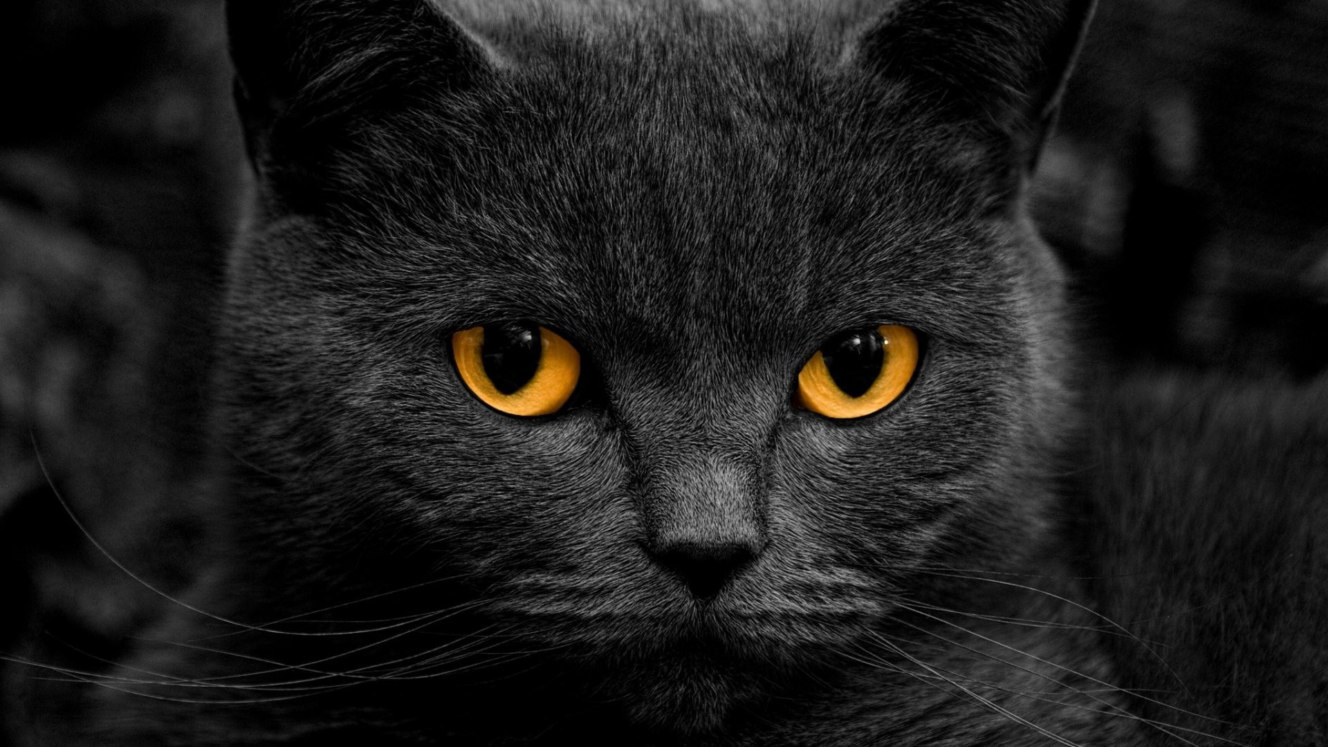 3d Dual Screen Wallpaper Cat Orange Eyes Shadow Wallpapers Hd Desktop And Mobile