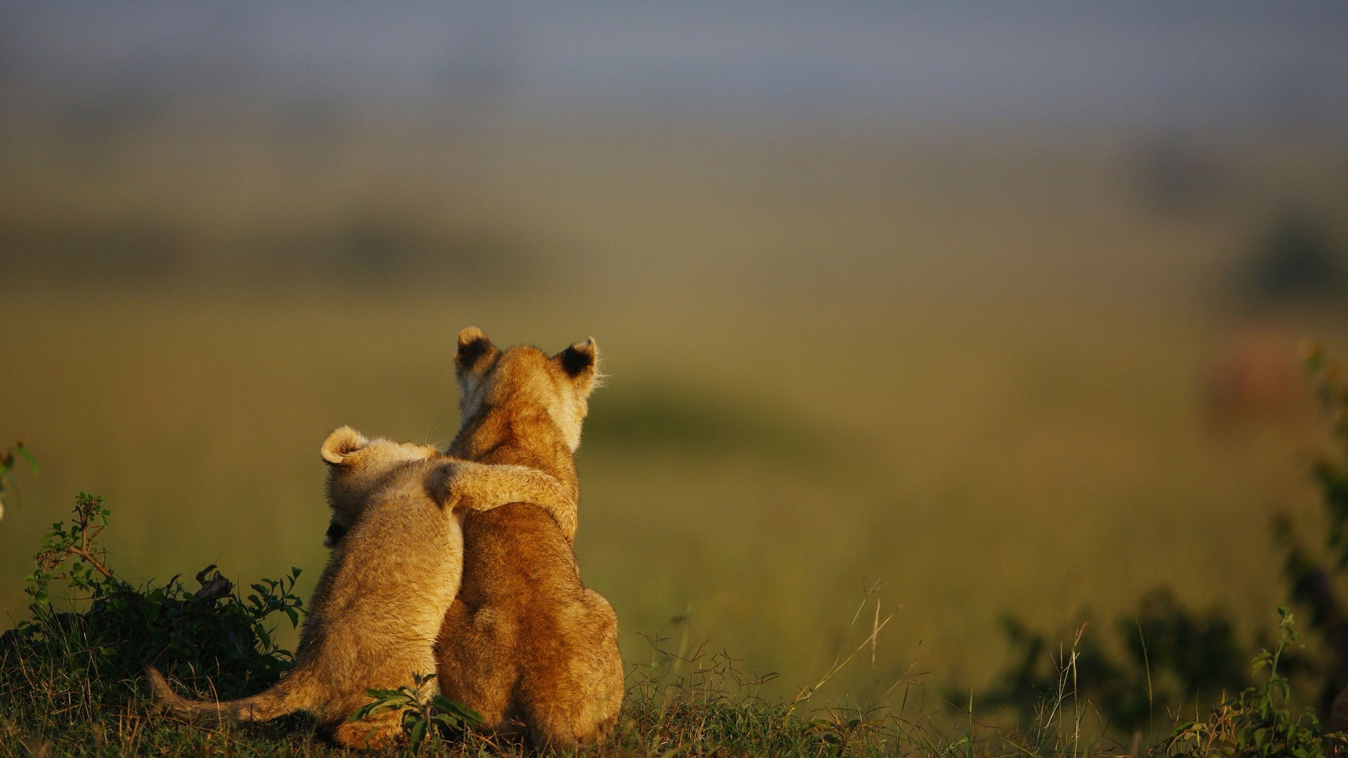 3d Lion Mobile Wallpaper Hugging Animals Baby Animals Lion Nature Wallpapers Hd