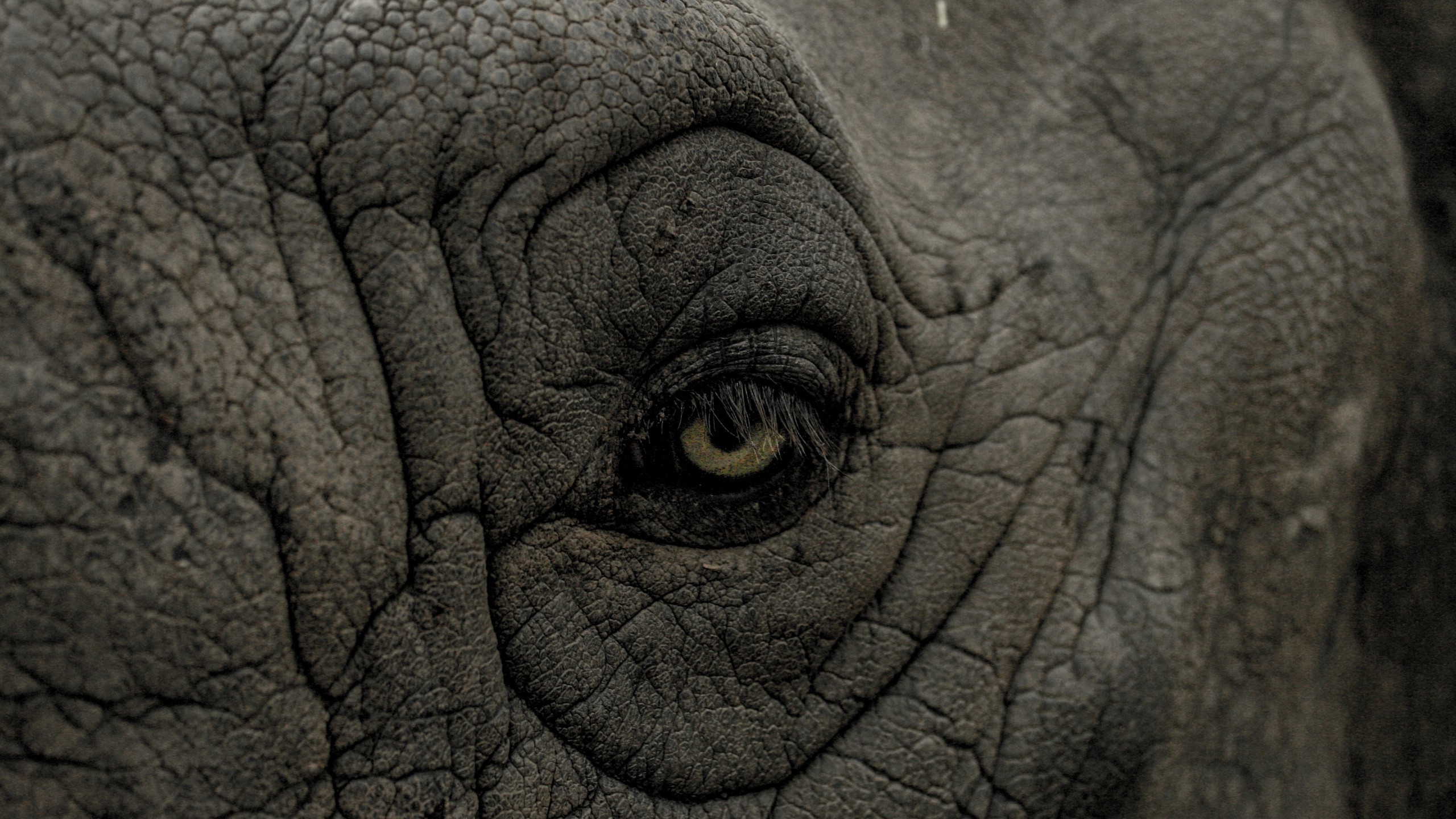 Wild Animal Wallpaper For Mobile Eyes Nature Animals Wrinkles Closeup Rhino Skin Wallpapers