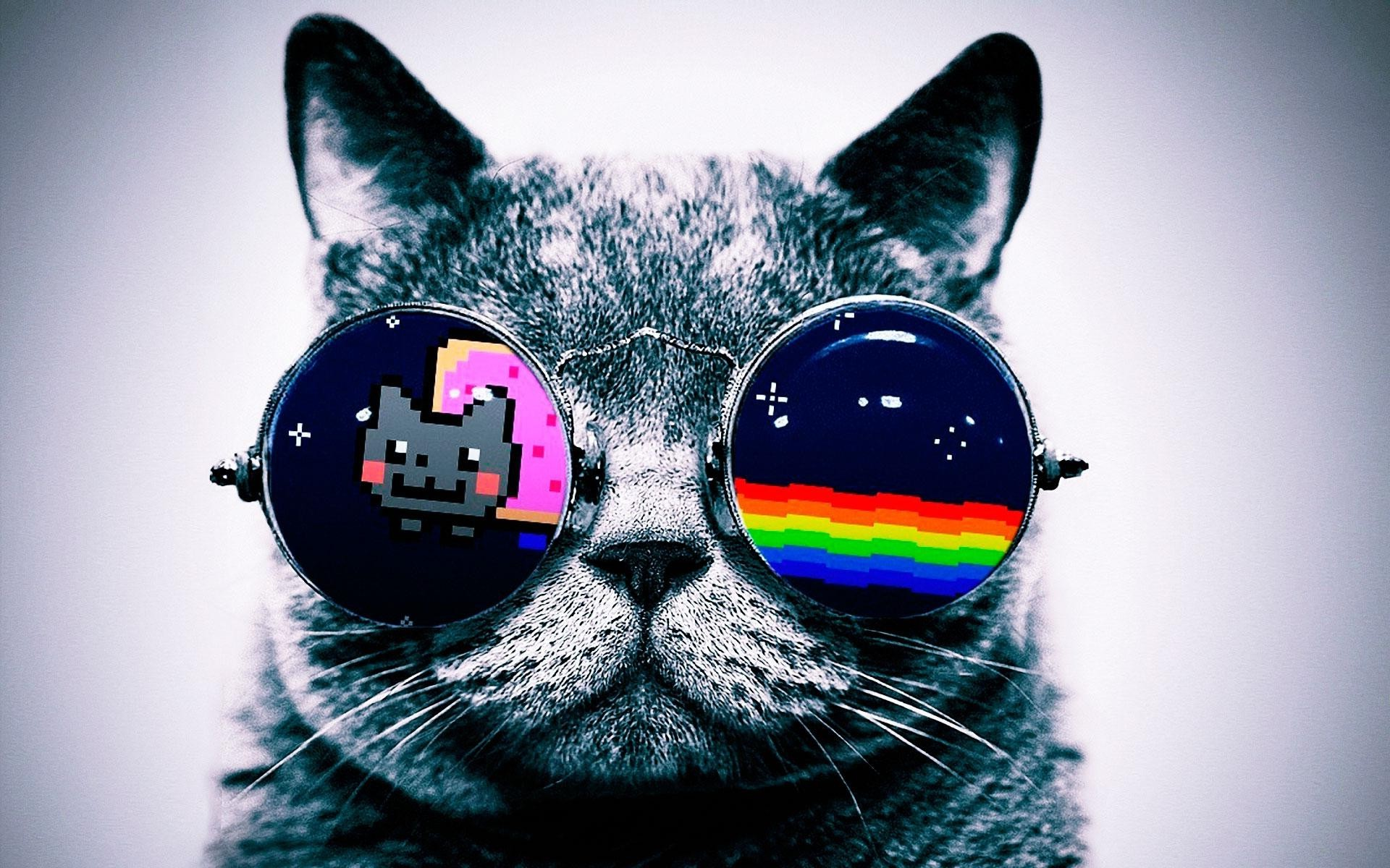 Iphone X Wallpaper Gif Landscape Nyan Cat Cat Glasses Wallpapers Hd Desktop And Mobile