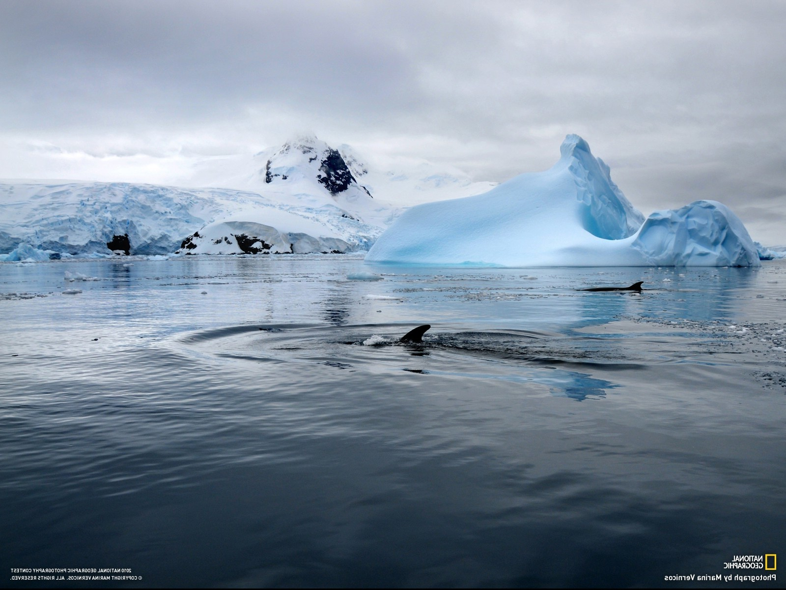 Black And Blue Cars 4k Wallpaper National Geographic Whale Iceberg Sea Antarctica Snow