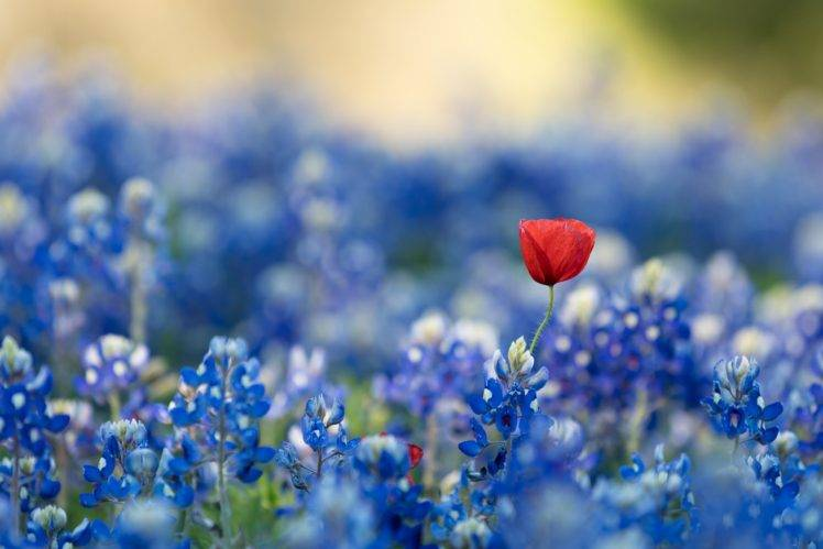 blue, Red flowers, Blue flowers, Flowers, Plants Wallpapers HD - blue flower backgrounds