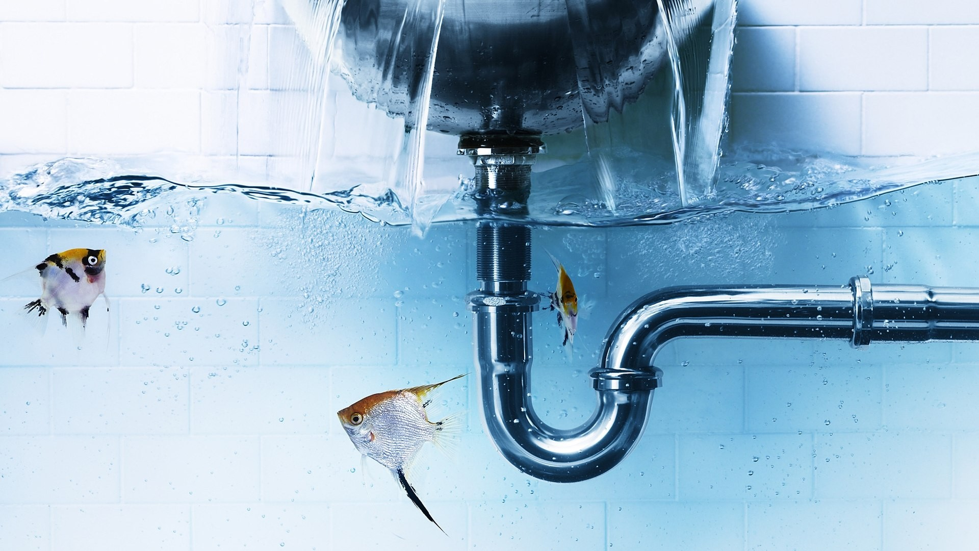 3d Fish Wallpaper For Mobile Photo Manipulation Water Pipes Underwater Fish