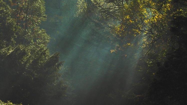Full Hd Wallpaper For 5 Inch Screen Trees Sunlight Dark Nature Wallpapers Hd Desktop And