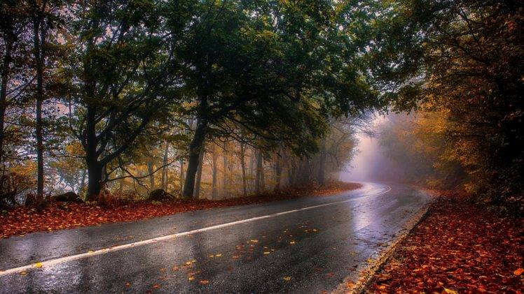 Fall Leaves Desktop Wallpaper Backgrounds Nature Photography Landscape Wet Fall Road Mist