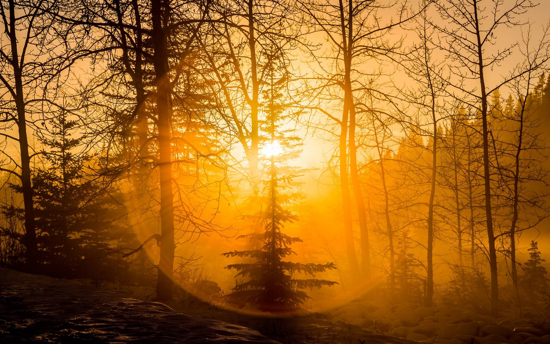 Wallpaper Nature Fall Photography Nature Landscape Forest Sunset Mist