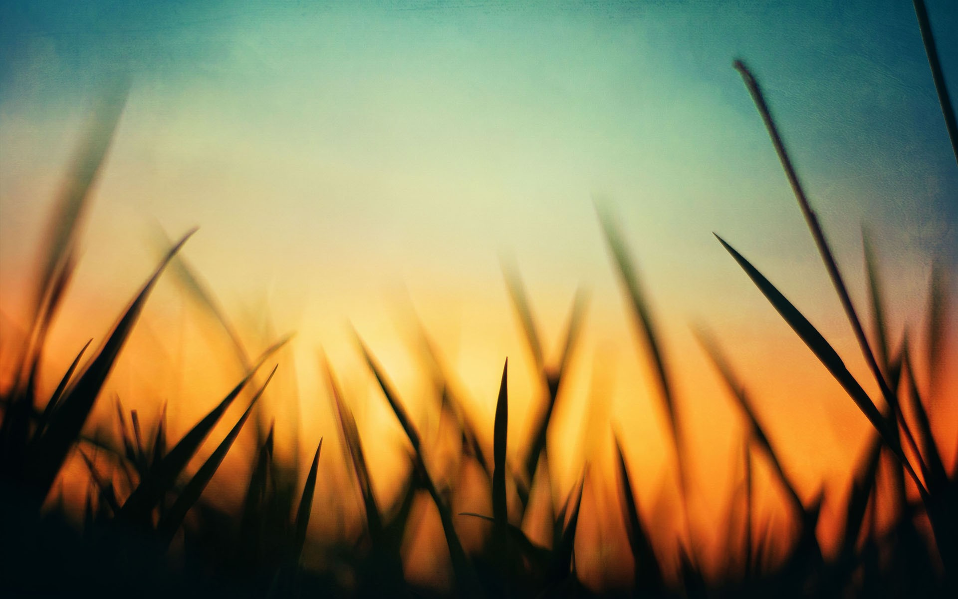 3d Hd Wallpapers For Laptop 1366x768 Grass Sunset Wallpapers Hd Desktop And Mobile Backgrounds