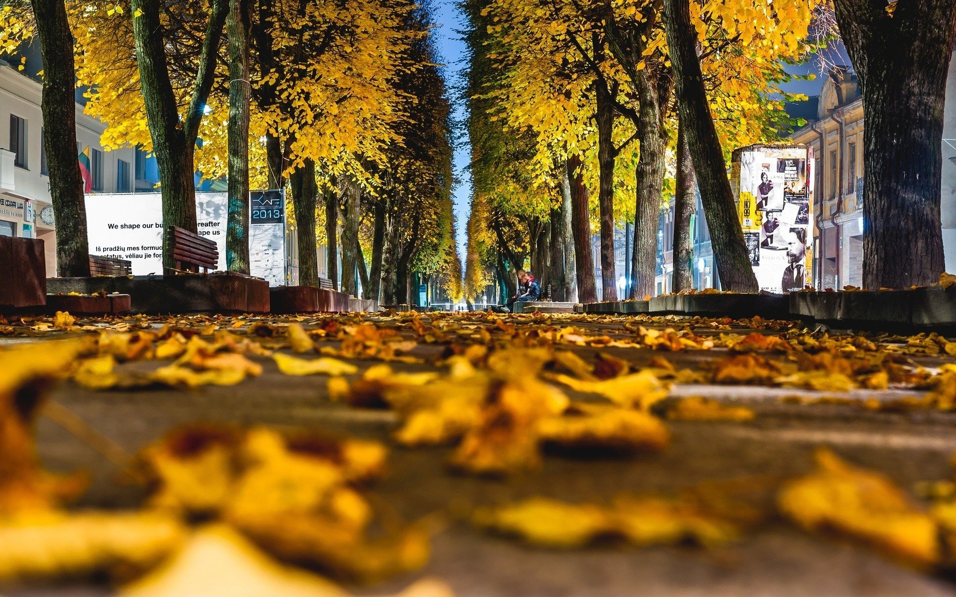 Rainy Fall Wallpaper Worms Eye View Trees Leaves Fall Street New York City