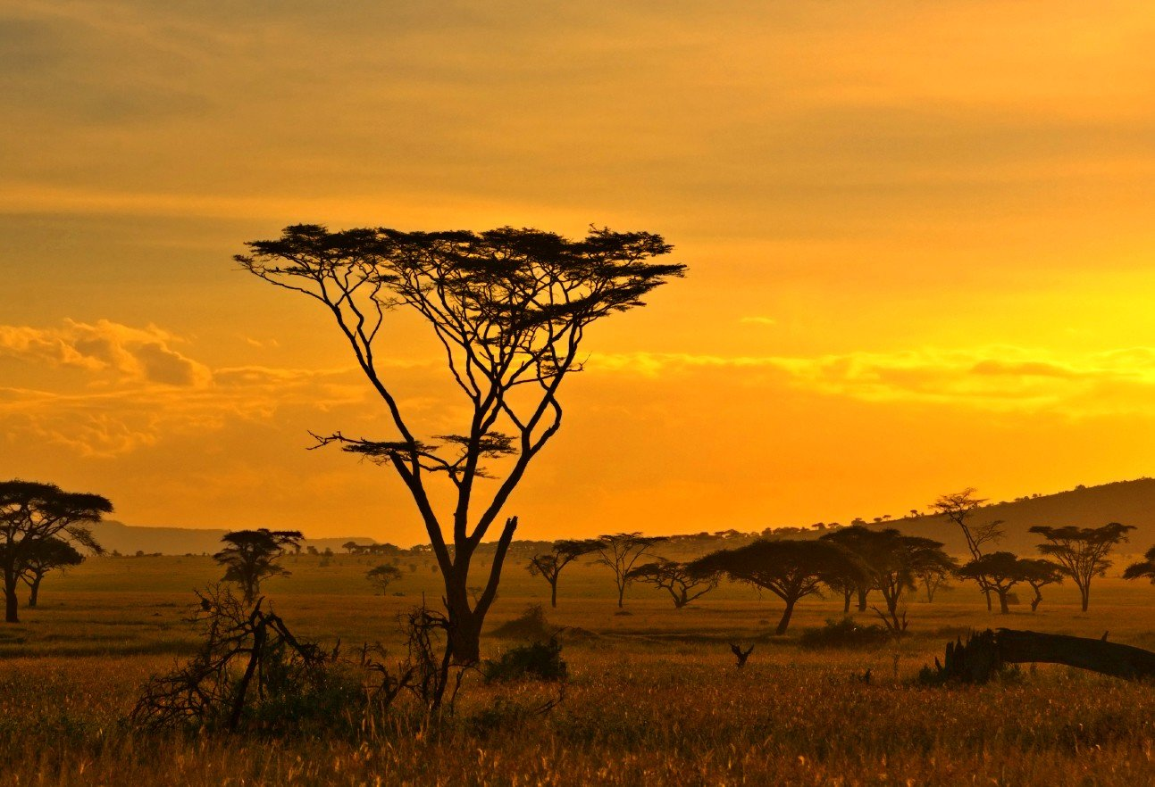 Savana Hd Africa Savana Wallpapers Hd Desktop And Mobile Backgrounds