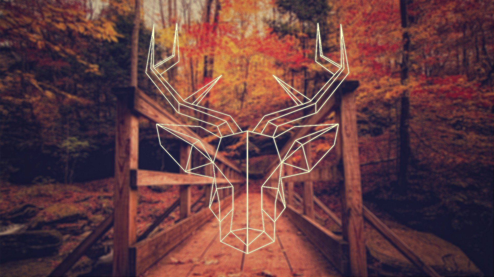 Download 3d Wallpaper For Computer Fall Deer Polygon Art Hipster Photography Simple