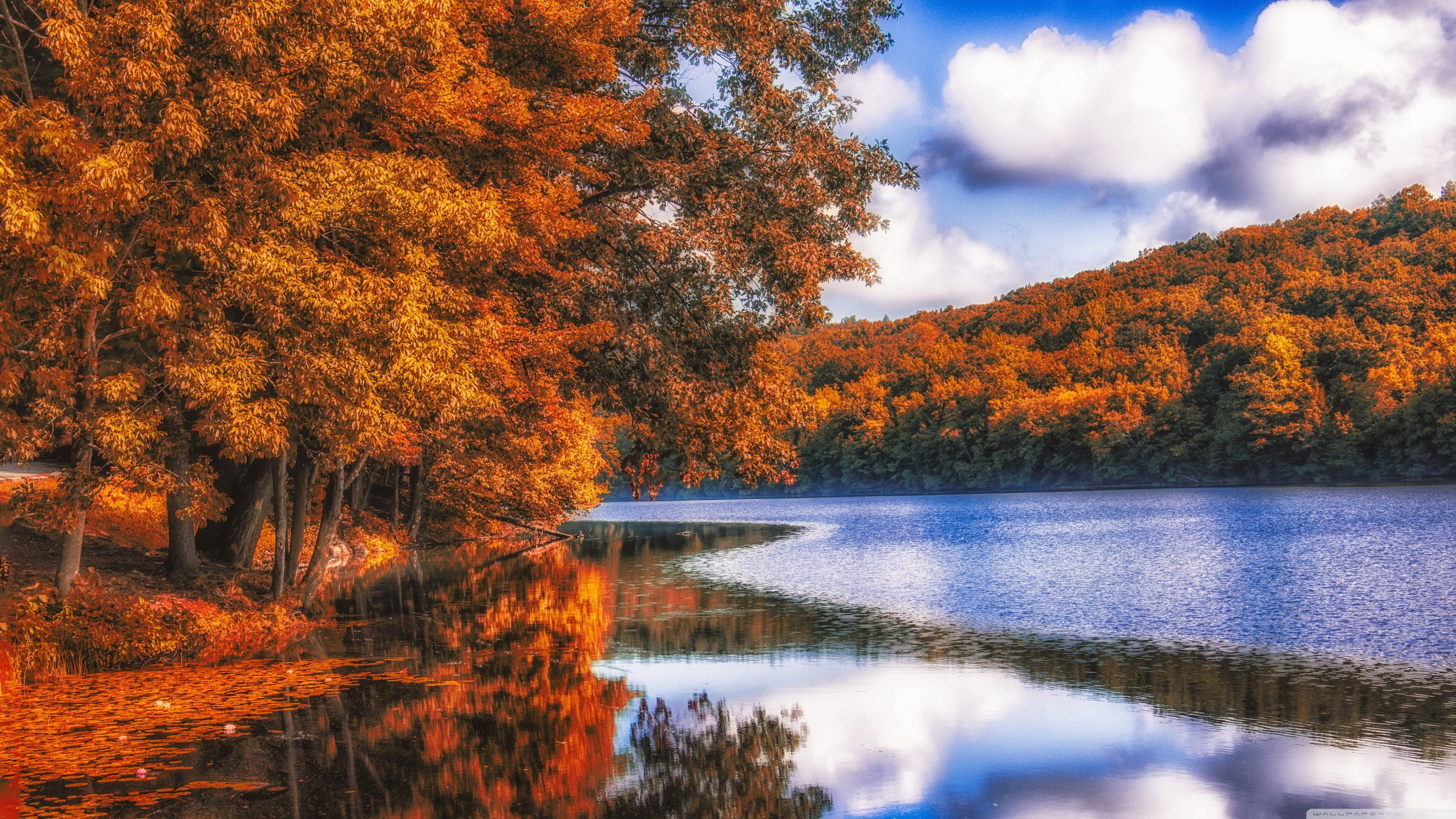 Fall Harvest Wallpaper 1024x768 Nature Forest River Wood Fall Blue Dead Trees Lake