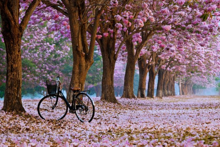 3d Game Wallpaper For Mobile Bicycle Cherry Blossom Wallpapers Hd Desktop And Mobile