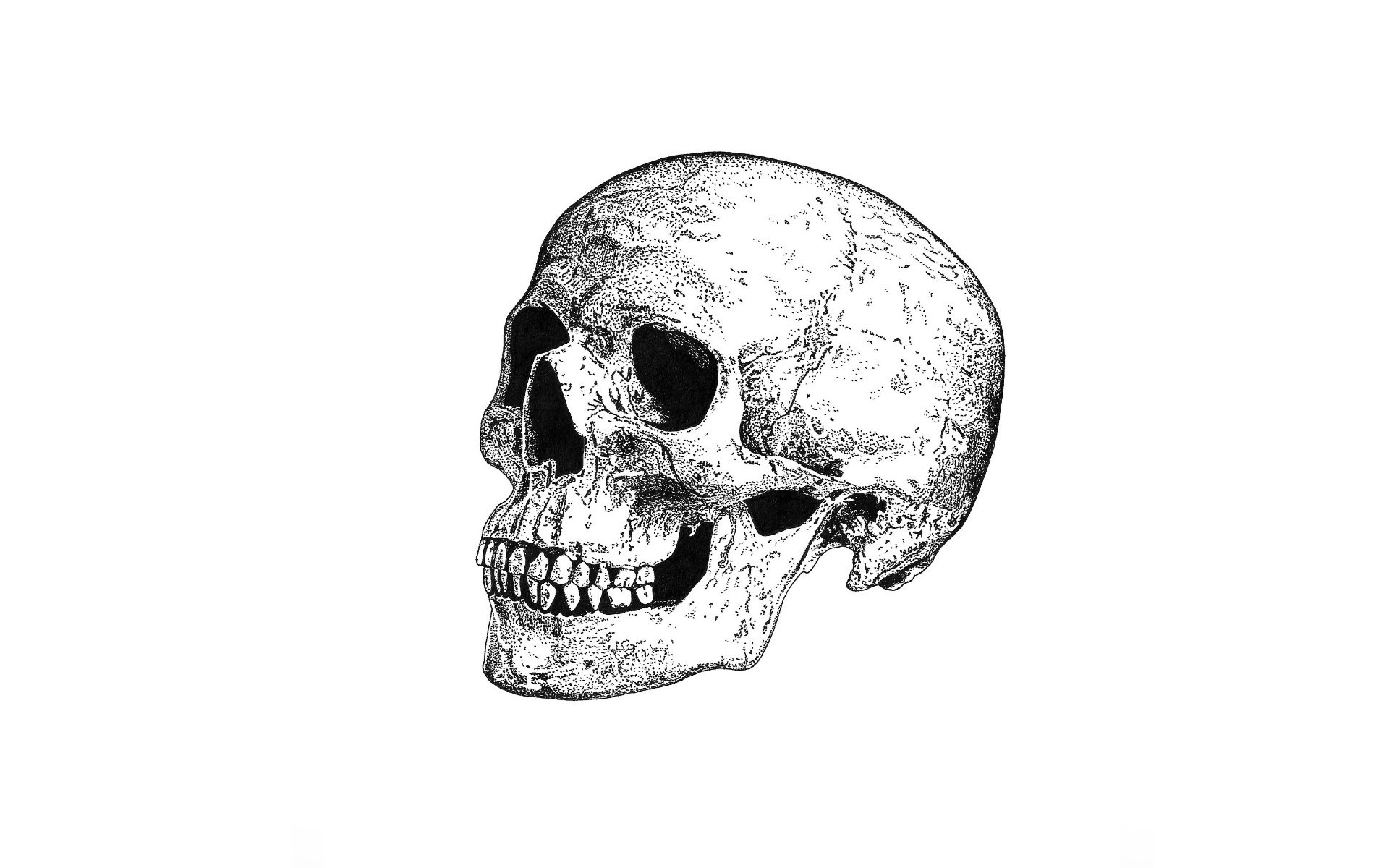 Most Amazing 3d Wallpapers Skull Artwork Minimalism Monochrome Wallpapers Hd