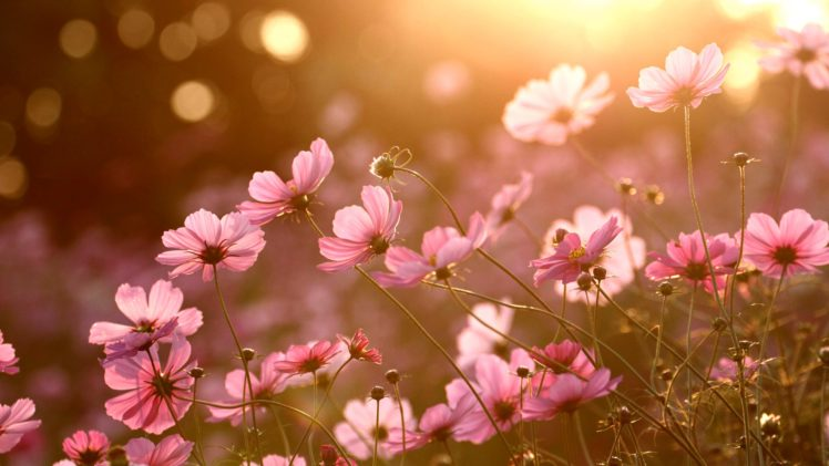 colorful, Nature, Sunlight, Plants, Flowers Wallpapers HD / Desktop