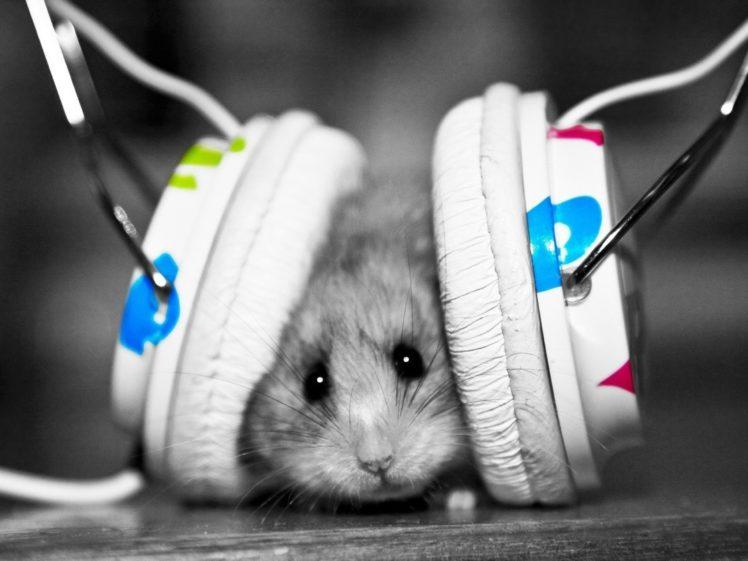 headphones, Music, Funny, Hamsters, Mice, Colors Wallpapers HD