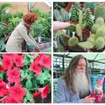 The joys of urban gardening