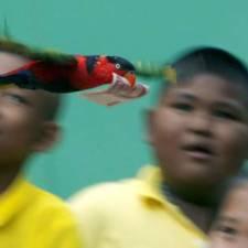 money bird
