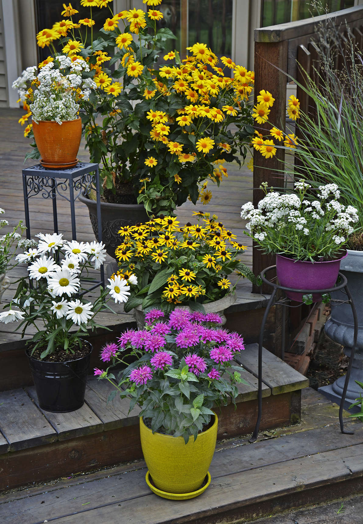 Outdoor Planters Near Me The Complete Guide To Growing Perennials In Containers Walters
