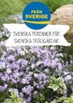 Svenska perenner_Phlox sub_A4