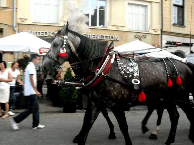 Horse and cart Krakow